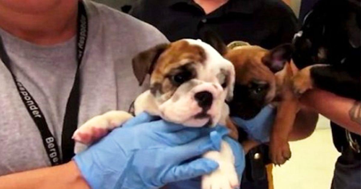 26 cachorritos han sido rescatados cuando iban a ser vendidos al comercio ilegal • La nube de algodón