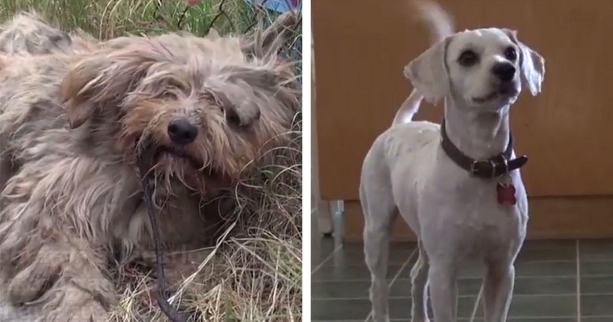 Consiguieron rescatar a este perro de la calle y la vida le cambió por completo • La nube de algodón