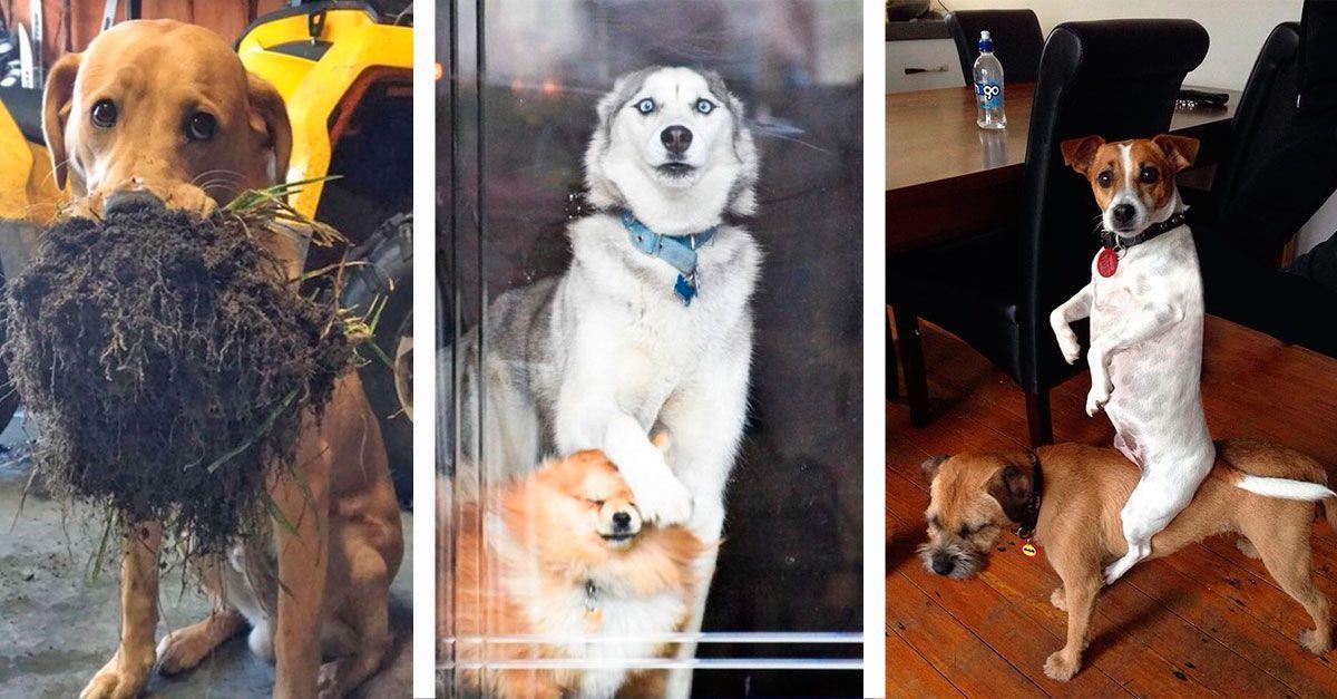 10 perros inmortalizados en el momento más gracioso • La nube de algodón