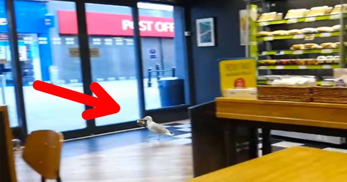 La gaviota entra en una tienda y se coge una bolsa de patatas fritas • La nube de algodón