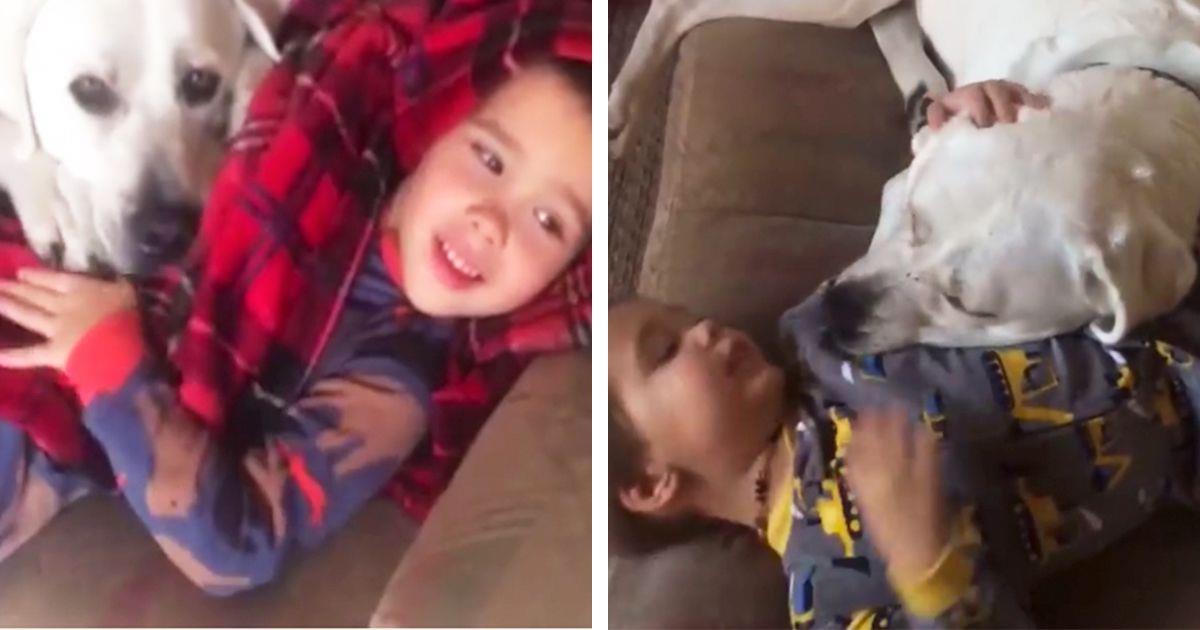 Inseparables, el perro ayuda al niño autista a integrarse mejor • La nube de algodón