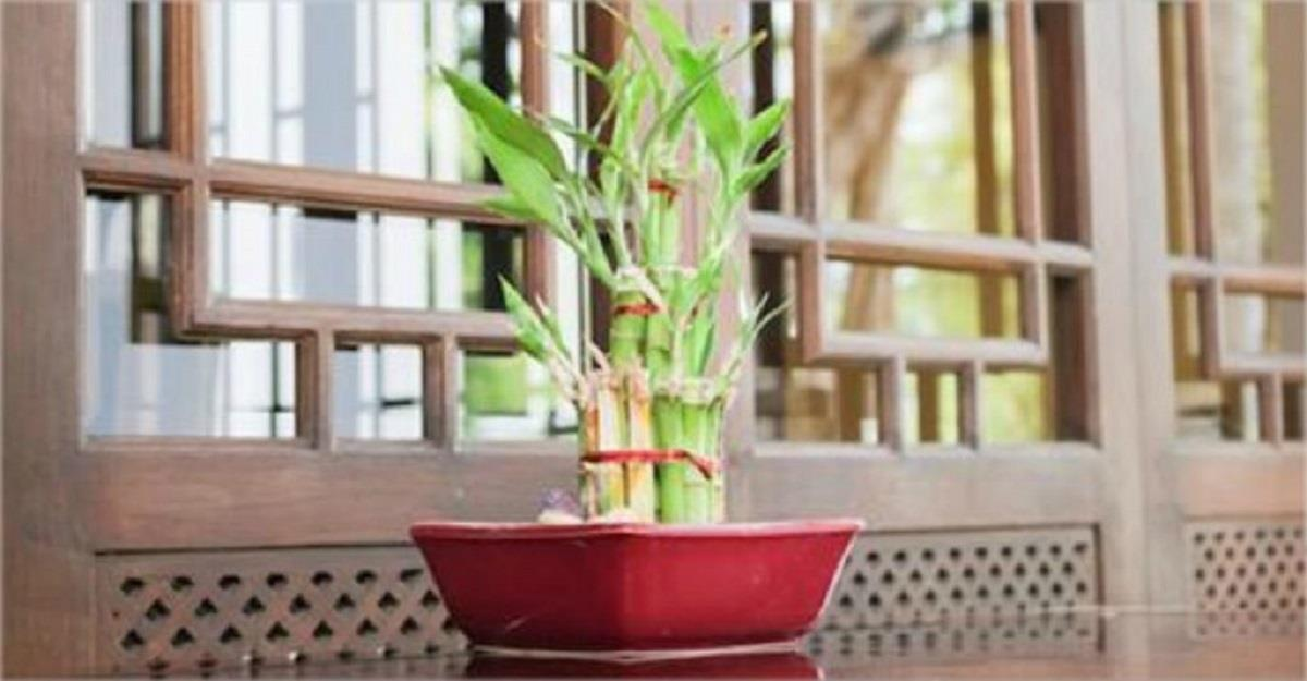 3 hermosas plantas que atraen vibraciones positivas y buena fortuna a tu hogar