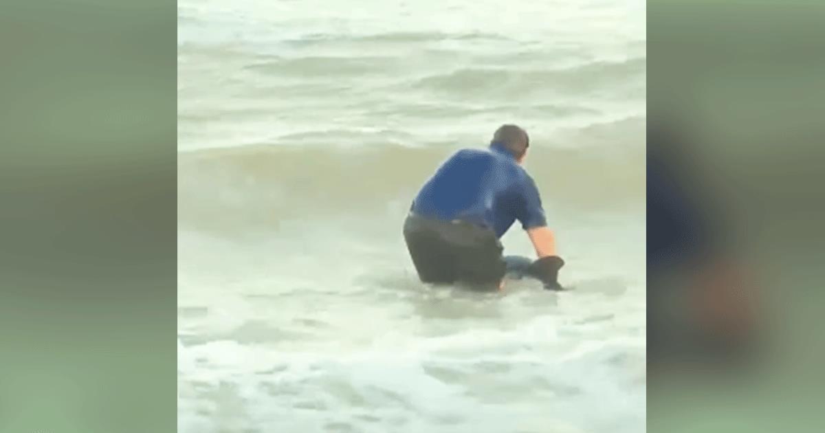 Reportero está en medio del noticiero cuando salta al agua para salvar a un delfín