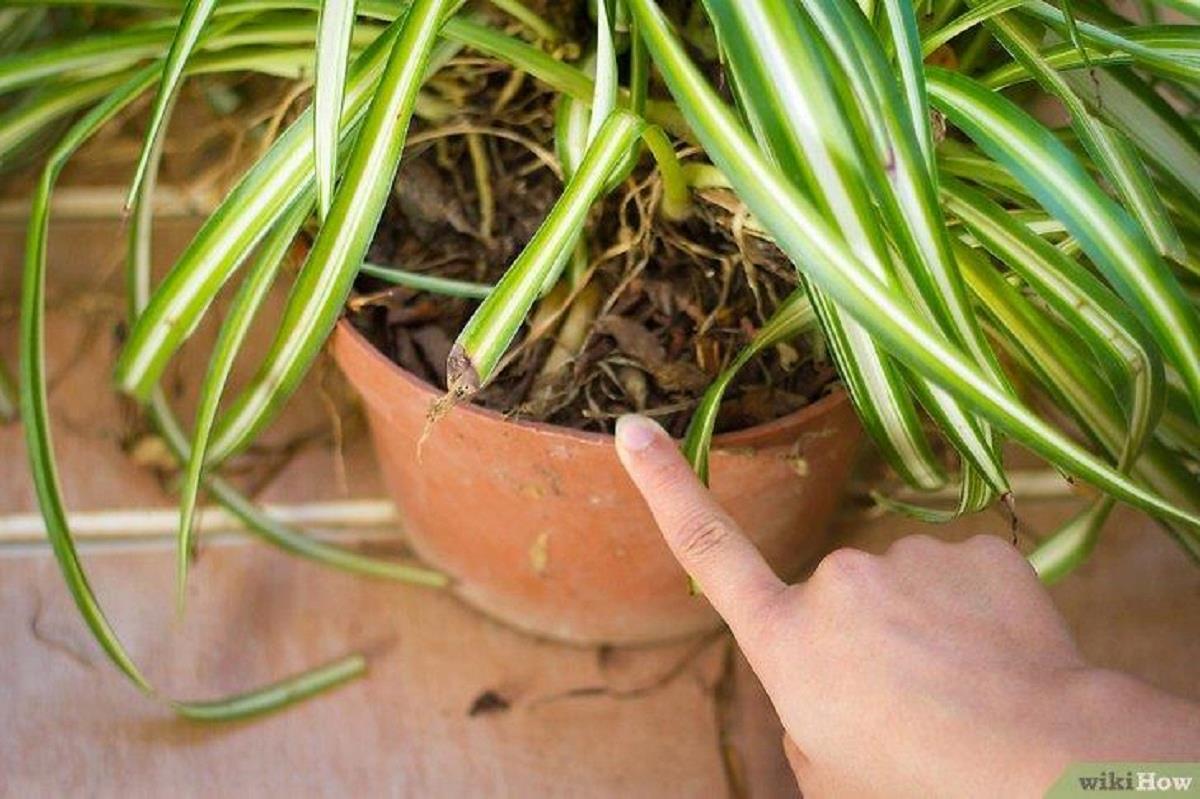 Si tienes una de estas plantas en tu casa entonces cuídala porque tienes un tesoro y ni cuenta te das - Hacer Juntos