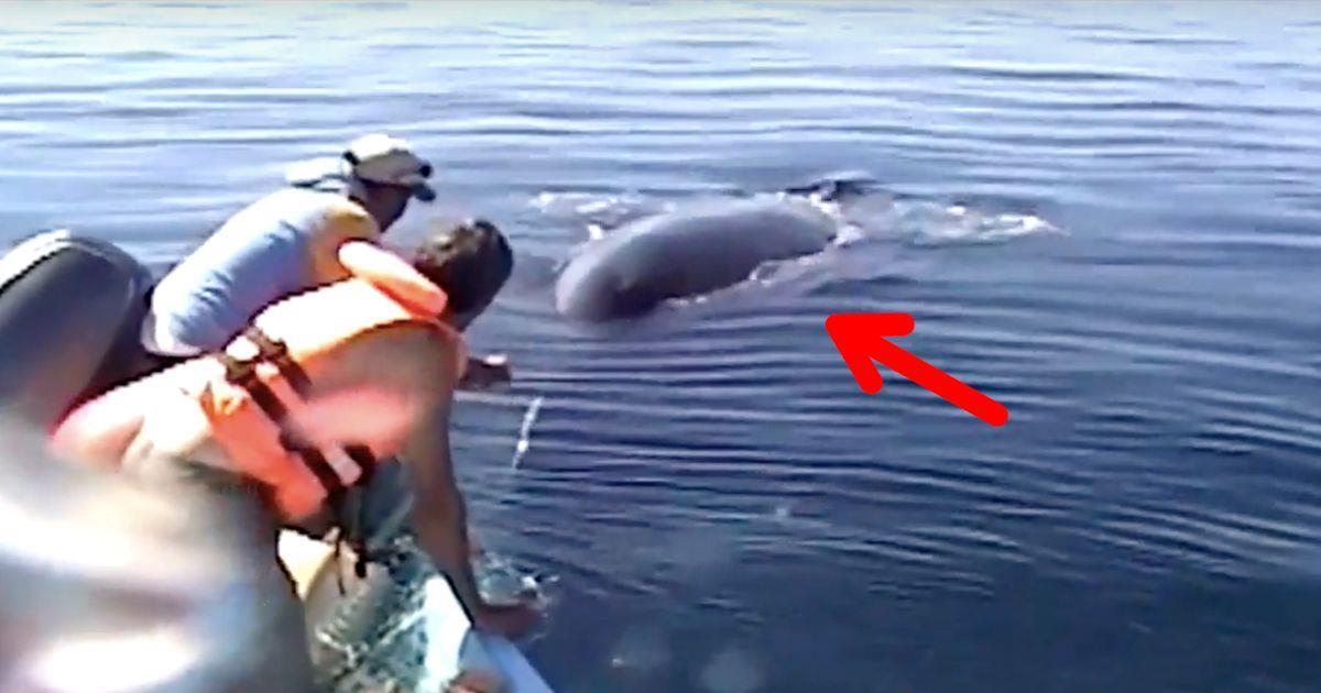 Encuentran una ballena atrapada en una red y la salvan. ¡Cómo lo agradece! • La nube de algodón