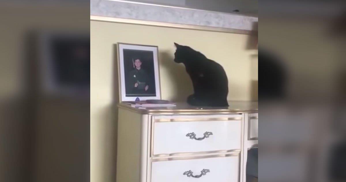 Gato negro no puede dejar de mirar fijo la foto de un oficial naval. Entonces mamá reúne las piezas y comprende.