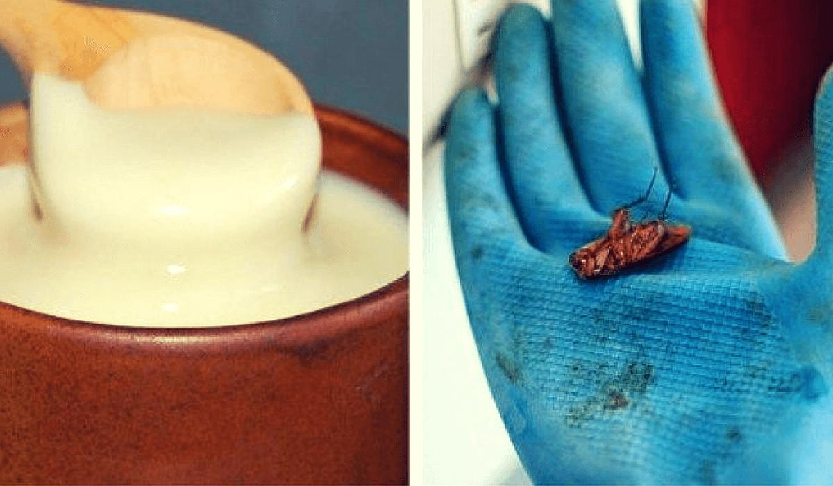 Cómo acabar fácilmente con las cucarachas en tu hogar desde hoy