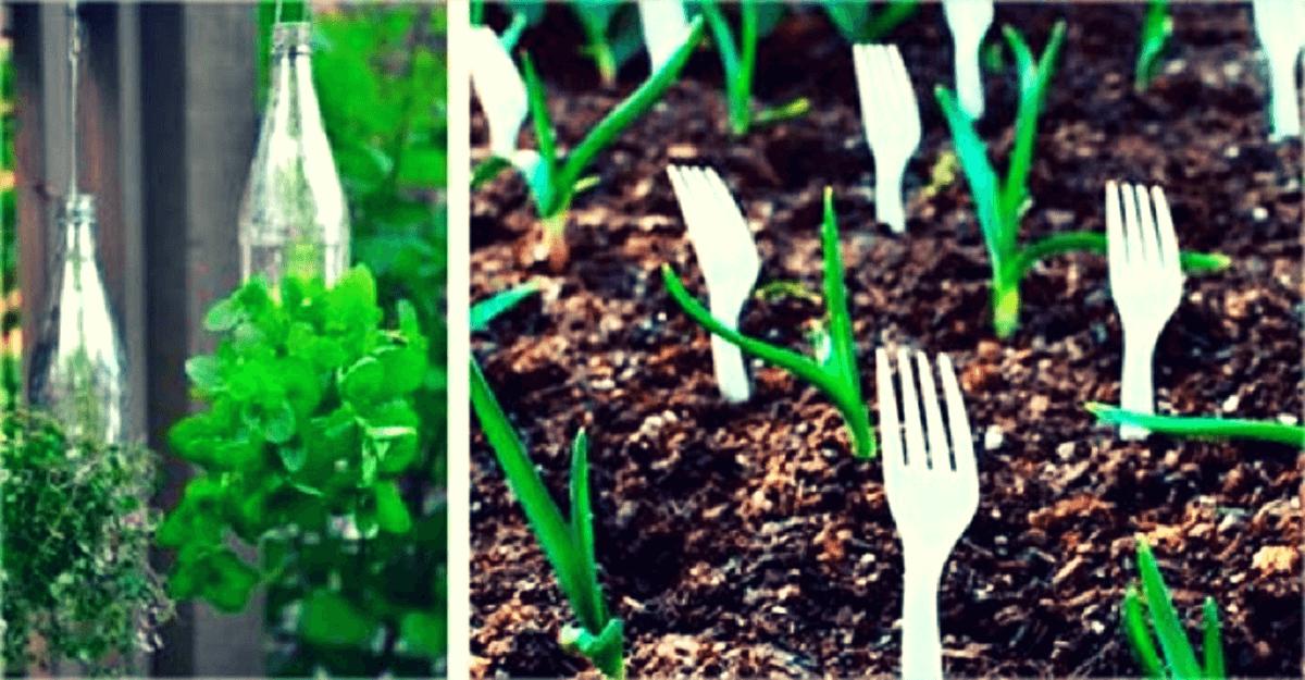 10 trucos de jardinería muy baratos, útiles y bellísimos
