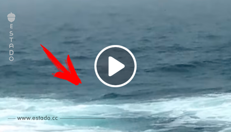 El salto de esta ballena jorobada se convierte en una de las imágenes más bellas del día • La nube de algodón
