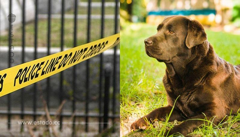 Fiel perro acompañó a su dueño moribundo esperando ayuda, pero fue tarde para ambos