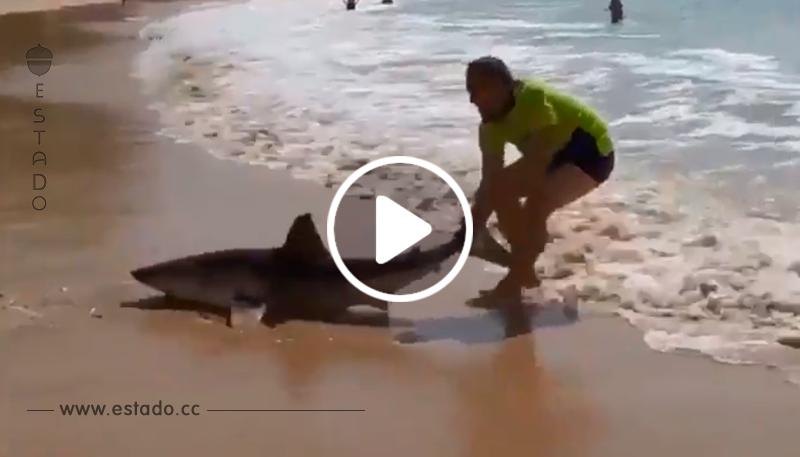 Un hombre se arriesga para salvar a un tiburón varado en la playa • La nube de algodón