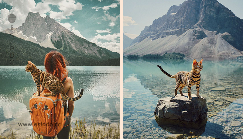 Conoce a Suki, el gato viajero que triunfa en la red • La nube de algodón