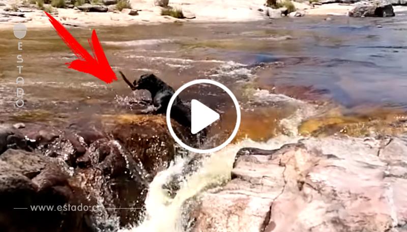 Un perro es arrastrado por la corriente y se salva inesperadamente • La nube de algodón