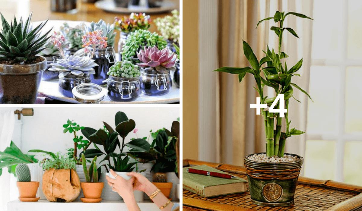Mantén alejadas todas las cosas negativas de tu hogar colocando alguna de estas 7 plantas del feng shui que te muestro…