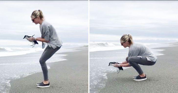 Un pichón de pingüino es liberado en la naturaleza y se detiene a mitad de camino para una dulce despedida