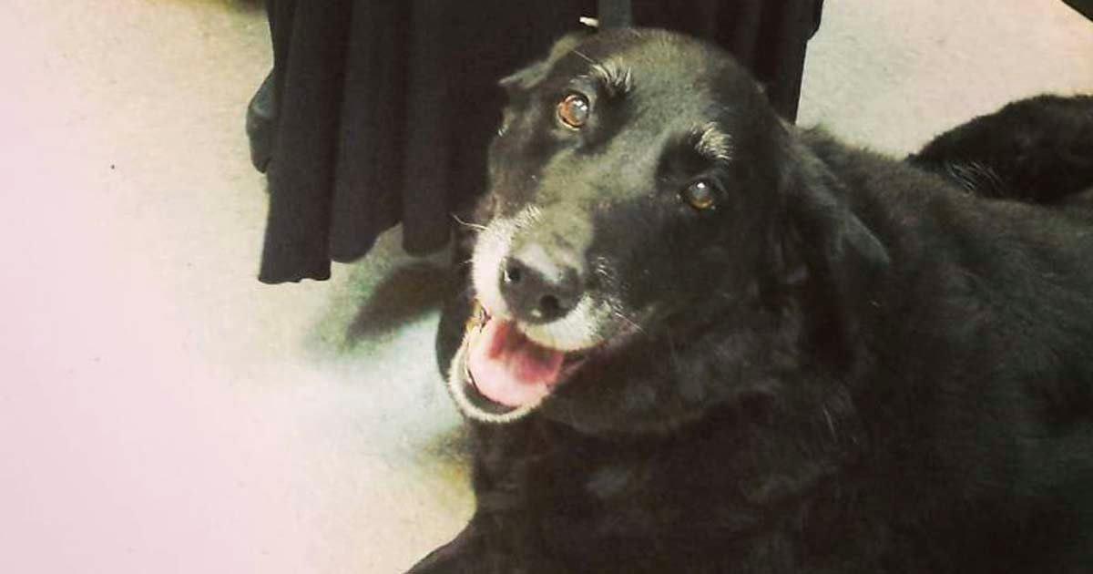 Se llevan la sorpresa de su vida cuando su perro desaparecido regresa a casa 10 años después