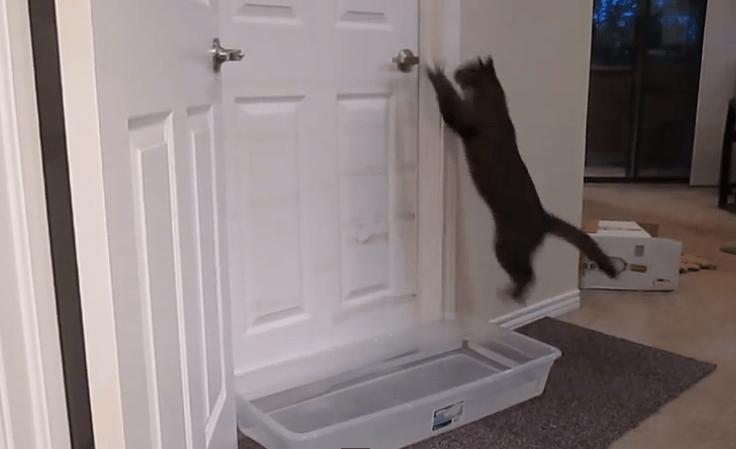 Este gato abre las puertas con una habilidad increíble