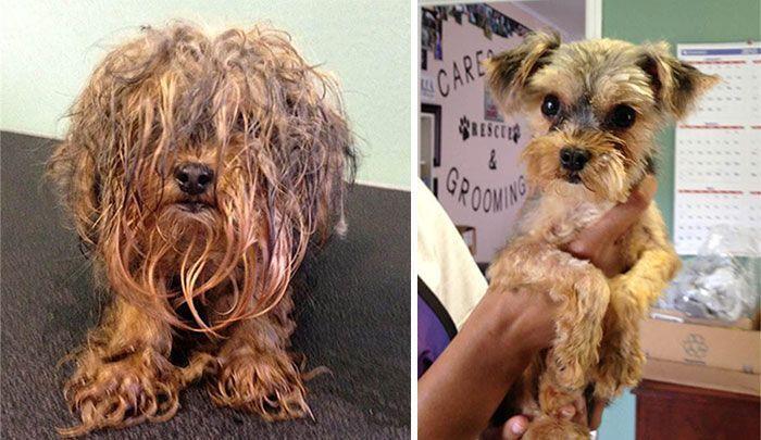 17 imágenes del antes y después de perros que fueron rescatados