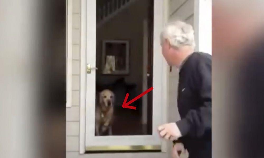 Esta recopilación de perros enfrentándose a puertas imaginarias hará que te partas de risa