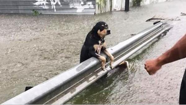 Durante una tremenda tormenta muchos dueños dejaron a sus perros para que murieran. ¡Estas fotos despertaron rabia en mucha gente!