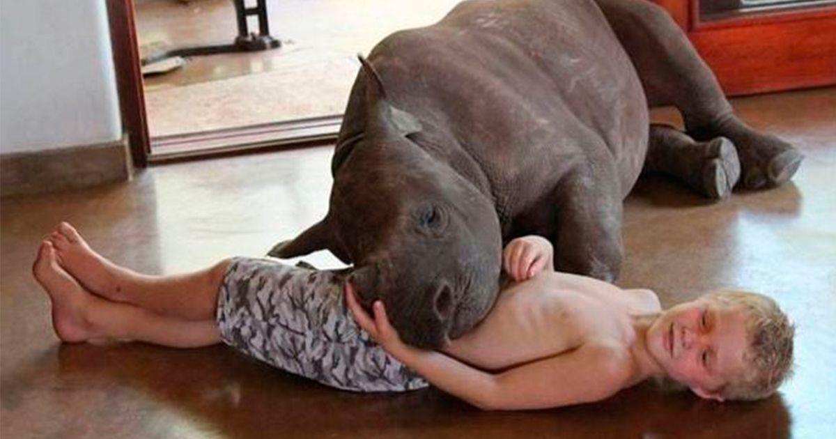 Garantizar un futuro mejor a los rinocerontes heridos   La nube de algodón
