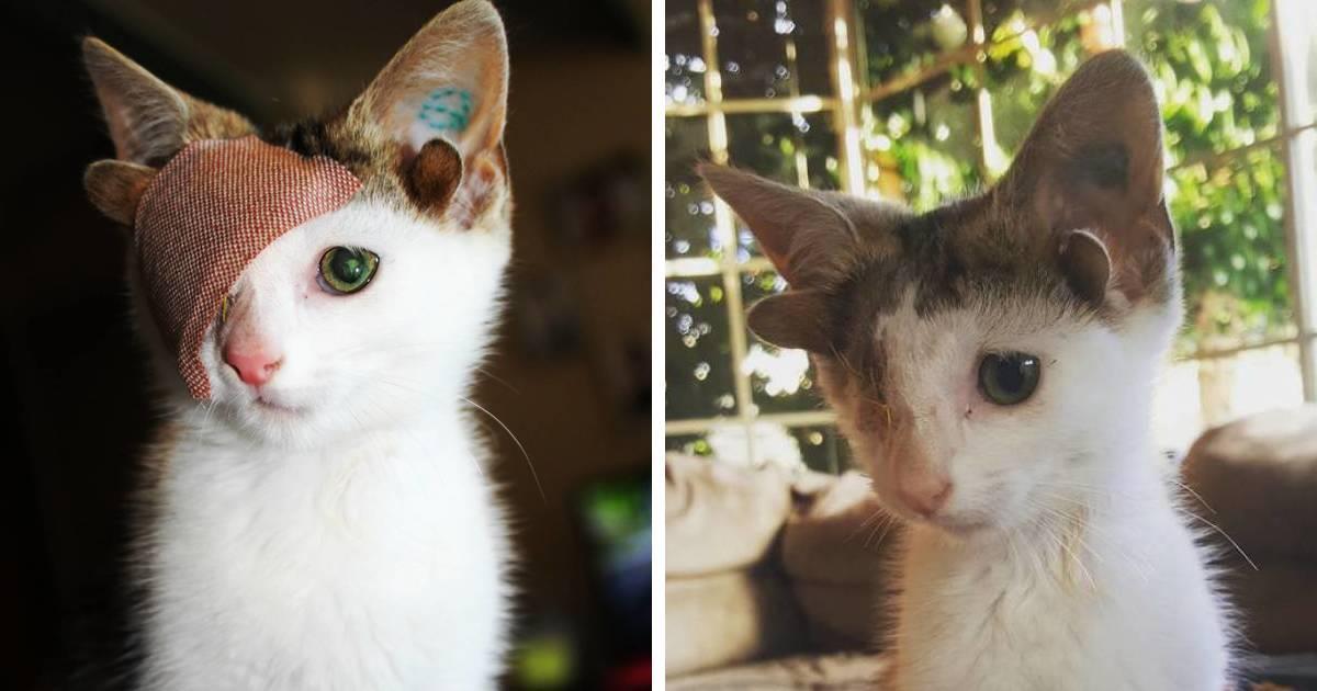 Este gatito rescatado con 4 orejas y 1 ojo escapa de su miseria tras encontrar un hogar
