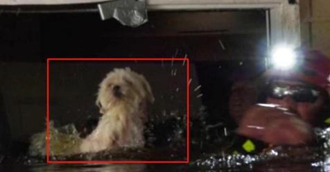Soshe estuvo durante 8 días sin comer y flotando en un sofá hasta que fue rescatada de una inundación