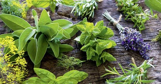 Las mejores plantas aromáticas: características y beneficios
