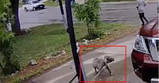 Esta perrita salio de su casa tan contenta pensando que iba a dar un paseo y nunca entendrá porque la abandonaron