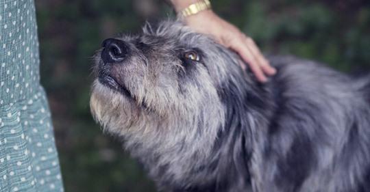 Aunque se emocionó al verlos nuevamente, el perro tomó una decisión que sorprendió a sus dueños.