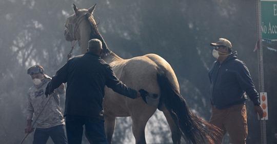 El heroico acto de un caballo para salvar a su familia de un incendio forestal
