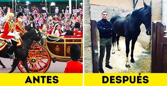 La historia de un exsoldado que adoptó al caballo con el que participó de la escolta real británica después de 10 años de no verlo