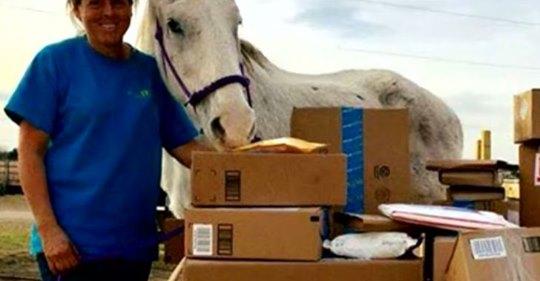 Viejo caballo salva su propia vida escondiéndose entre burros, y ahora recibe correo de fans