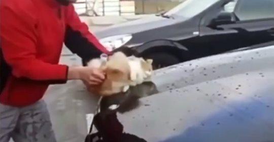 INDIGNANTE!!!! Un hombre coge a un pobre gato callejero y lo usa como esponja para lavar su auto