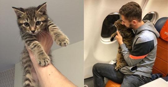 Aerolínea castigó a un pasajero por viajar con un gato con 'sobrepeso' en su equipaje