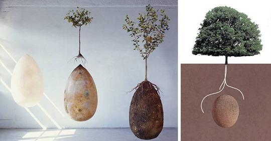 No más ataúdes: vainas orgánicas para entierros convertirán a nuestros seres queridos fallecidos en árboles