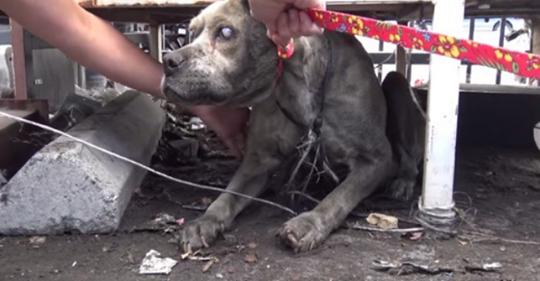 Este perrito abandonado, ciego y con muchas heridas emocionales no se rinde y quiere conocer el amor