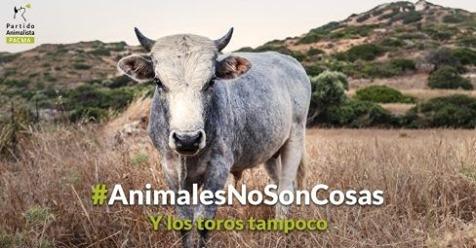 España aprueba una ley a favor de los animales, pero no es tan buena noticia como parece