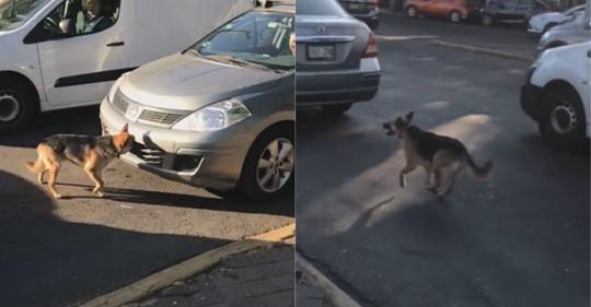 El desgarrador momento en el que un perro abandonado perseguiría a sus dueñas en la calle