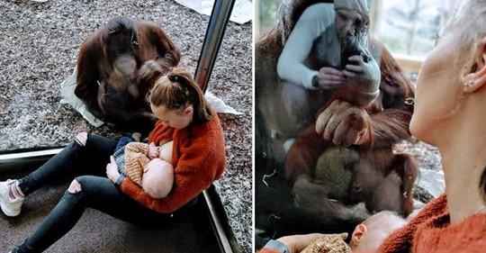 El conmovedor encuentro entre dos madres de diferentes especies que está generando profundo debate