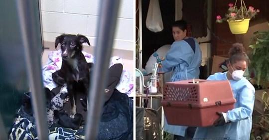 Propietarios llaman a la policía por el mal olor que proviene de la casa de los vecinos y los oficiales descubren más de 100 perros atrapados en su interior