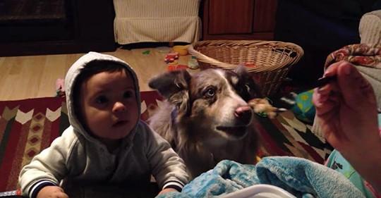 Mamá intenta sobornar a su hijo con comida para que pronuncie mamá, pero el perro de la familia le gana