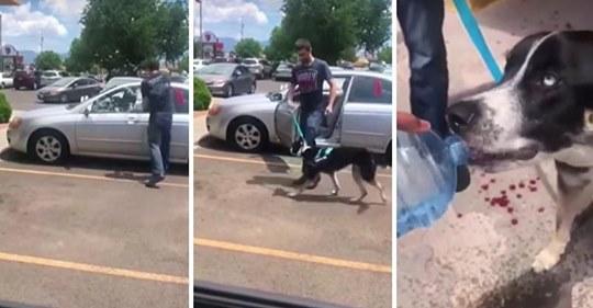 Perro histérico suplica a extraño que lo salve de un auto hirviendo y este espera para confrontar al dueño