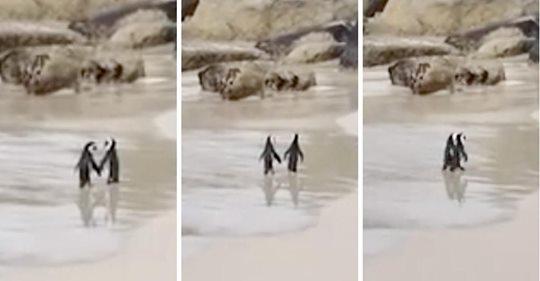 Una pareja de pingüinos enamorados van tomados de la mano  mientras caminan por la playa