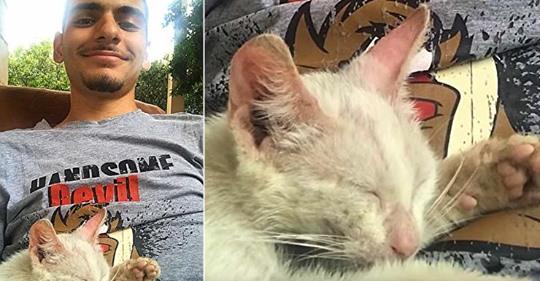 Se quedó dormido y, al despertar, encontró una gata callejera dormida sobre su panza