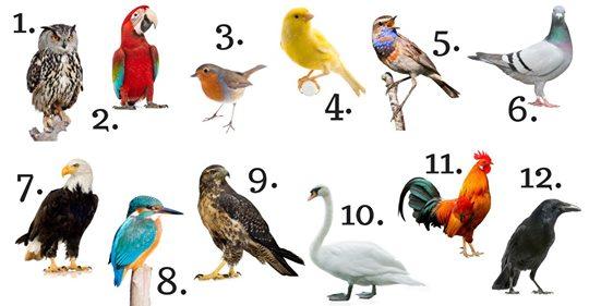 ¡Mira lo que el pájaro de tu mes del nacimiento revela sobre tu personalidad