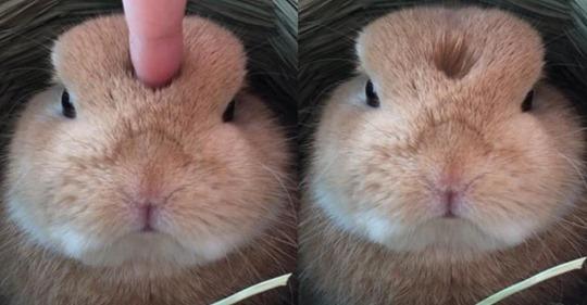 18 razones para tener un conejo como mascota