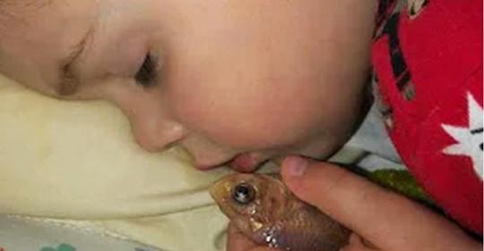 Niño de 4 años mata accidentalmente a su pececito luego de acurrucarse con él en la cama toda la noche: Solo quería acariciarlo