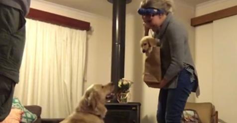 Lulu no puede disimular la emoción al ver al nuevo miembro de la familia, un cachorrito maravilloso