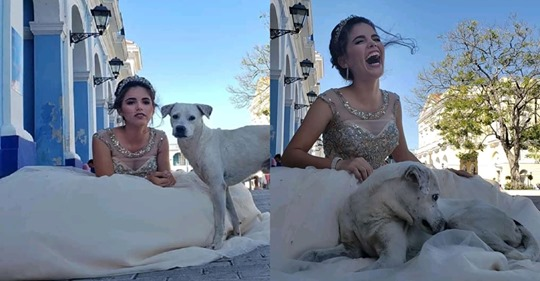 Fotos de quinceañera se interrumpen por un perrito callejero